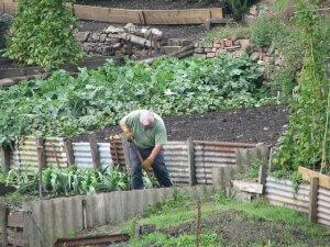 gardening-475350_640